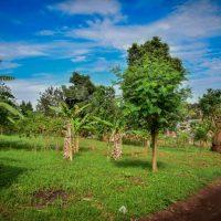 Land For Sale: Kisaasi-uganda